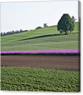 Oregon Flower Farm Canvas Print