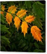Oregon Grape Autumn Canvas Print
