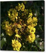 Oregon Grape Flowers Canvas Print