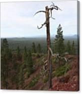 Oregon Landscape - Confused Tree At Lava Butte Canvas Print