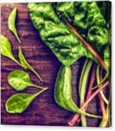 Organic Rainbow Chard Canvas Print