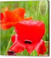 Oriental Poppy Flower Art Prints Poppies Red Baslee Troutman Canvas Print
