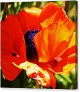 Oriental Poppy Series  No.1 Canvas Print