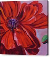 Oriental Poppy With Bud Canvas Print