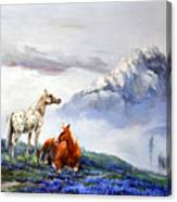 Original Oil Painting On Canvas Two Horses Canvas Print