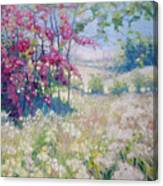 Original Oil Painting - Spring Meadow In Sussex Canvas Print