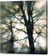Original Tree Canvas Print
