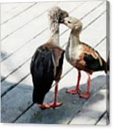 Orinoco Geese Touching Heads On A Boardwalk Canvas Print