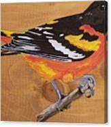 Oriole 7 Canvas Print