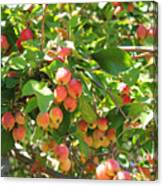 Ornamental Apples On A Tree Canvas Print