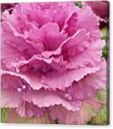 Ornamental Cabbage Canvas Print