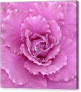 Ornamental Cabbage With Raindrops - Square Canvas Print