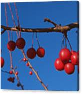 Ornamental Crabapple Branch Canvas Print