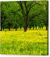 Osceola Landscape Canvas Print