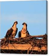 Osprey At Home Canvas Print