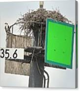 Osprey At Its Nest In A Navigation Marker Canvas Print