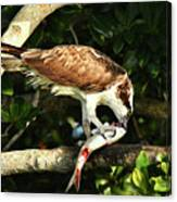 Osprey Dining Canvas Print