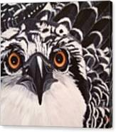 Osprey Eyes  Canvas Print