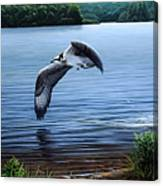 Osprey Over Clear Lake Canvas Print