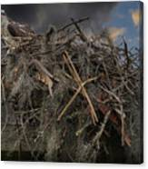 Osprey Protecting The Nest Canvas Print