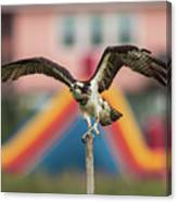 Osprey Salutes The Busch Eagle Canvas Print