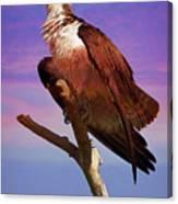 Osprey Solo Canvas Print