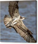 Osprey Take-out Canvas Print