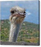 Ostrich Head Canvas Print