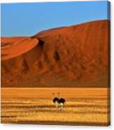 Ostriches At Sossusvlei Canvas Print
