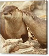 Otter Affection ... Montana Art Photo  Canvas Print