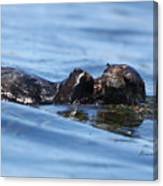 Otter Bliss Canvas Print