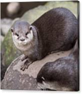 Otters In Arms Canvas Print