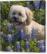 Our Bud In The Bonnets Canvas Print