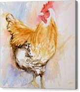 Our Buff Rooster  Canvas Print