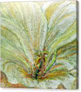 Our Sun Rejoices Canvas Print