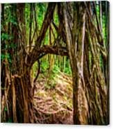 Out Of The Hole And Through The Trees Canvas Print