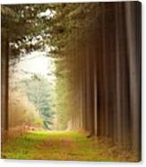 Out Of Woods Canvas Print