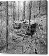 Outcrop, Woods, Dipton Burn Canvas Print