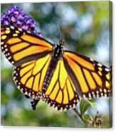 Outstretched Monarch Canvas Print