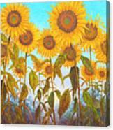 Ovation Sunflowers Canvas Print