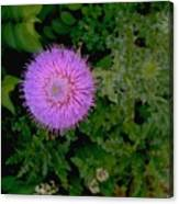 Over A Thistle Canvas Print