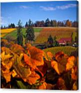 Over The Durant Vineyards Canvas Print