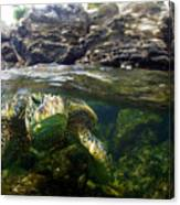 Over Under Honu Canvas Print