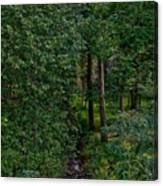 Overgrown Brook Canvas Print
