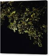 Overhead Branch Canvas Print
