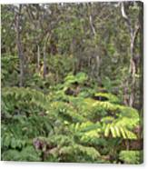 Overlooking The Rainforest Canvas Print