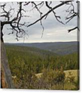 Overseeing The Canyon Canvas Print