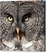 Owl 6 Canvas Print