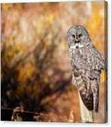 Owl 9 Canvas Print