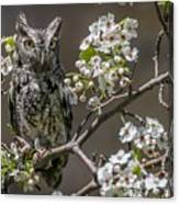 Owl Among The Blossoms Canvas Print